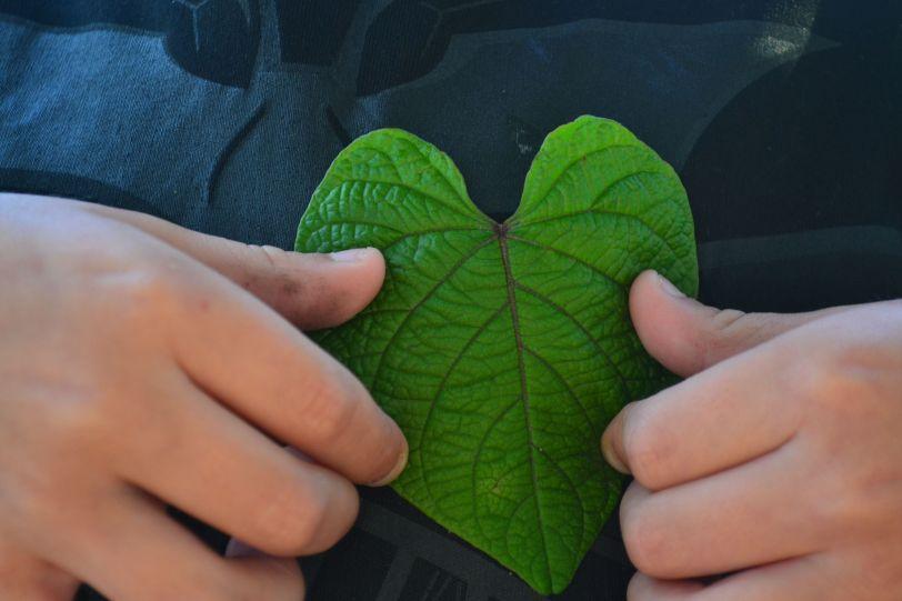 max's heart